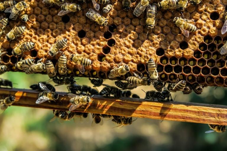 Bienenwachs Waben